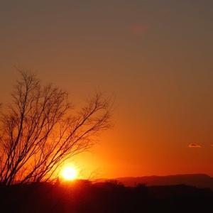 冬木立に沈む夕陽と夕焼け富士