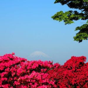 赤いツツジ越しに観る富士
