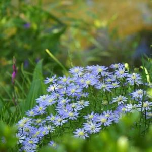 薄暑の散歩道に咲く花