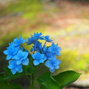 横浜八景島~八景ブルー