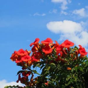 夏空に映える花たち