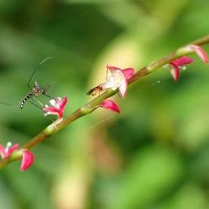 猛暑日は蚊も休みって本当!?