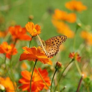 大船フラワーセンター花と蝶たち