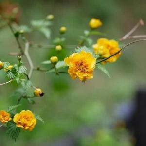 4月の庭先を彩る春の花々