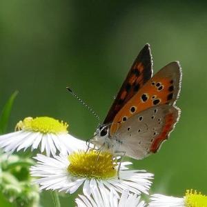 梅雨の晴れ間散歩で見かけた蝶たち