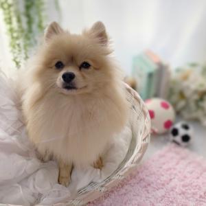 【日々の事】娘のテスト期間、愛犬レオンくんとリフレッシュ。