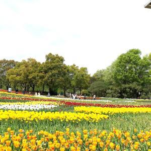 【春を満喫!】木曽三川のチューリップ