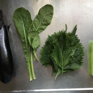 楽しい野菜生活 巨大大葉と巨大ナス