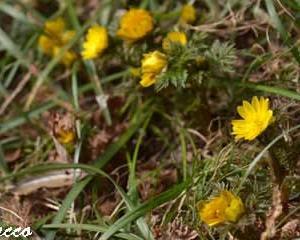 山野草が咲き出した(2)