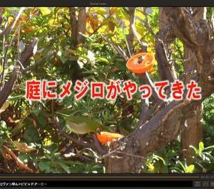 自宅でビデオ撮影(3)