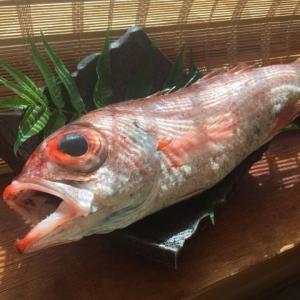 新潟県立海洋高校と近大がノドグロの人工孵化に成功していた