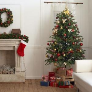 新潟の街に続々とクリスマスツリーが登場!