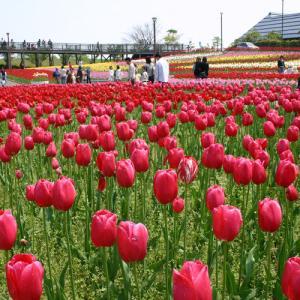新潟県の花・チューリップを表参道でPR!