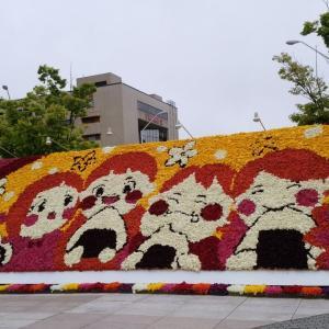 桜の次はチューリップ!新潟県の花であるチューリップを愛でよう