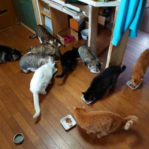 CELAとの出会いと我が家の猫達