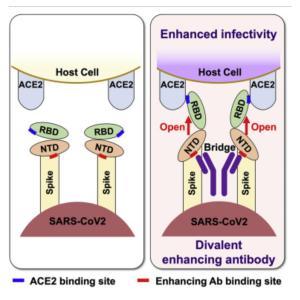 【メモ】Enhanced infectiveity.