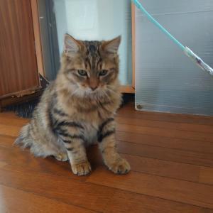 保護猫12匹目(累計22匹)
