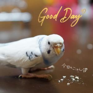サブちゃんの平和な一日