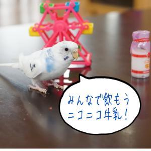 妄想インコ劇場 経営戦略