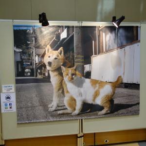2019年08月31日(土) 岩合光昭写真展『ねこといぬ』を観賞した [姫路市書写]