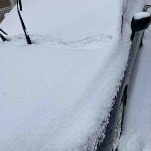 福岡でもこんな雪