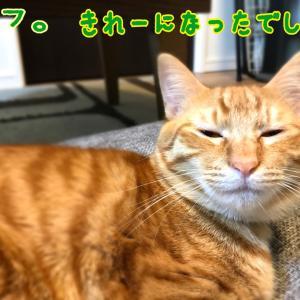 猫の病気の話
