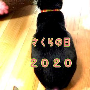 2020桜の日
