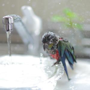 水浴びブルブル