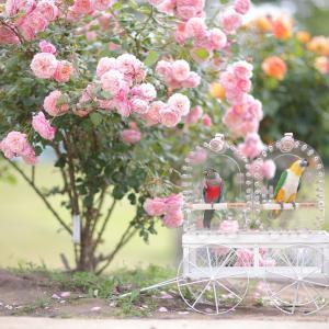 あづま運動公園のバラ