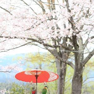 あづま運動公園の桜