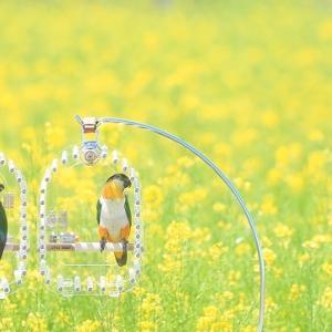 四季の里 菜の花畑