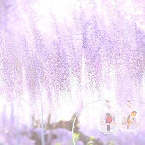 藤の花とインコ