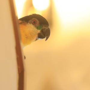 鳥なのに(^^)