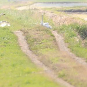 出勤前の野鳥撮影