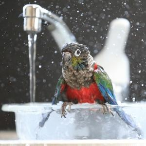 水浴びとか