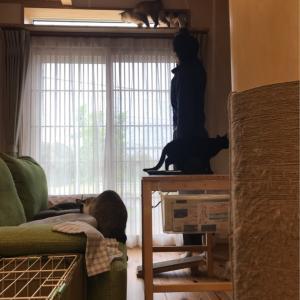 猫のお家つづきー