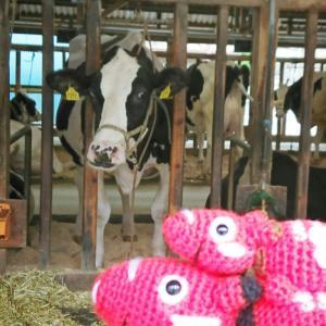 富士宮市いでぼくへ ◆来年の干支 牛さんと赤ベコ親子のあみぐるみ