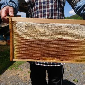 今季初、蜜蜂達からハチミツを分けてもらいました