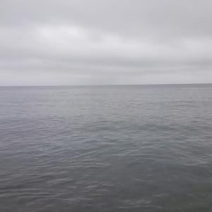 サクラ釣り東積丹からの西積丹~♪