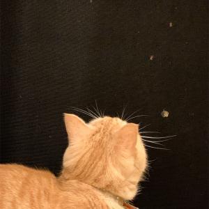 猫の知る初夏