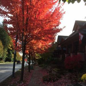 紅葉とパンプキン