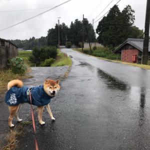 人の雨傘、犬の雨合羽