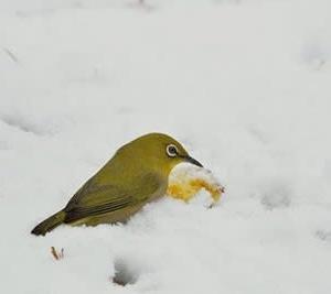 また雪でした