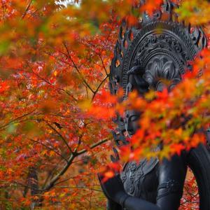 今年も撮りに行きたい「平等寺」の紅葉