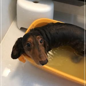 水嫌いなアスティ