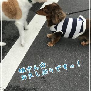 東京で楽しむ夏!