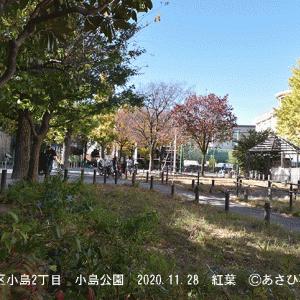 ここは台東区小島2丁目にて 小島公園の紅葉