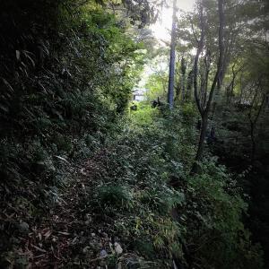 限界集落に近づく道