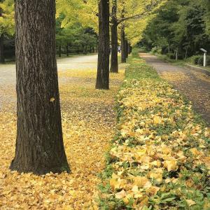 黄葉と紅葉が進む。