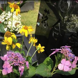 洋子の母命日に【花】を添える。